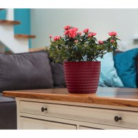 Decor ghiveci MAGNOLIA JERSEY-FI 190 mm 28- Bordo-LA733