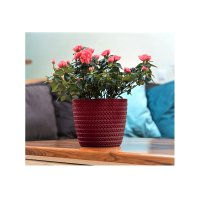 Decor ghiveci MAGNOLIA JERSEY-FI 220 mm 28- Bordo-LA734
