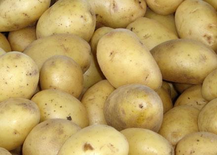 cartofi noi olanda